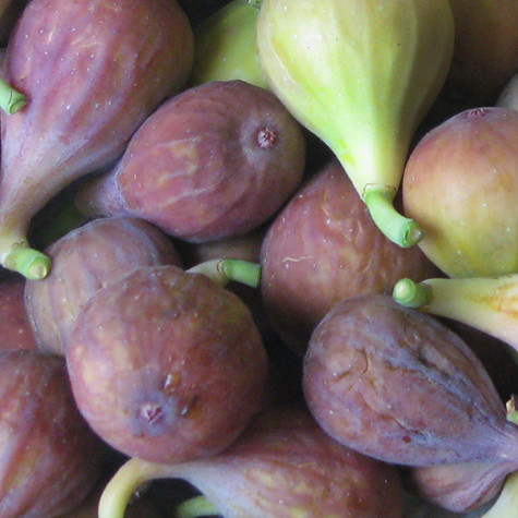 Sep 10, · Under ideal conditions, fresh figs will store for as long as 5 to 7 days, or frozen in a sealed bag or container for up to 6 months. How To Freeze Fresh Figs Individually quick frozen Fresh Figs will keep up to 6 months in the neavrestpa.ml: Resolved.